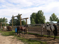 Horse Ranch, Alberta for sale